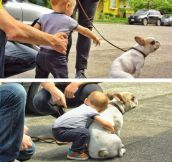 Little Boy Meets French Bulldog