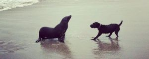 The Encounter Of Two Species