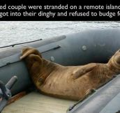 Animals Are Jerks, Here's proof… (22 Pics)
