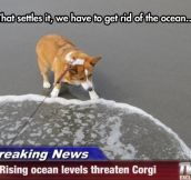 Save The Corgi