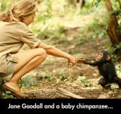 Friendly Chimp