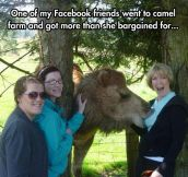 The Smug Look On That Camel's Face Is Hilarious