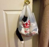 Cat On A Bag