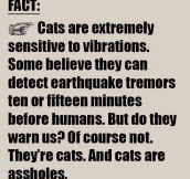 Another Cat Fact