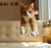 Cat In Mid-Air