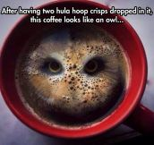 Owl In Coffee