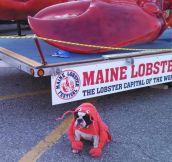 Lobster Dog