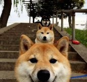 Dogeception