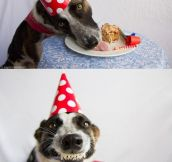 Dog's Party