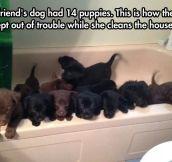 Puppy Control
