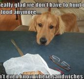 Dog Thoughts On Food