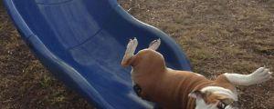Dogs Don't Slide