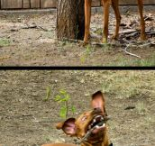 A Stick Can Make A Big Difference