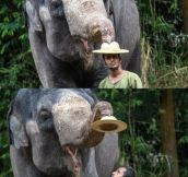 Elephants With a Good Sense of Humor