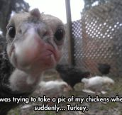 Turkeys Are Such Pranksters