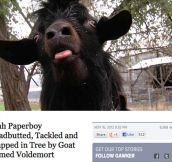 Goat Who Shall Not Be Named