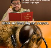 Male Honeybee Tragedy
