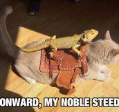 Onward Cat