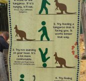 Kangaroo Feeding Tips