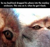 Monkey Selfies