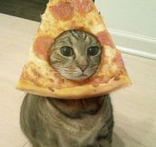 Magnificent Pizza Cat
