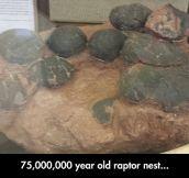 Raptor Nest Fossil