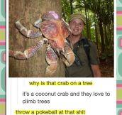 Real Life Pokemon