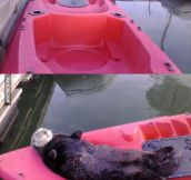 Lazy Sea Otter