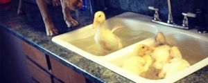 Supervising Bath Time