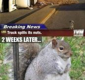 When Life Gives You Nuts