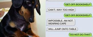 If dogs could text…(11 Pics)
