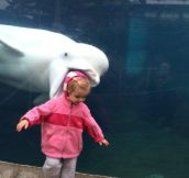 24 Unbelievably Timed Animal Photobombs