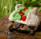 Snail And Tortoise Sweaters Not Only Exist But Are ADORABLE