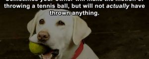 Awesome Life Hacks for Dogs