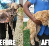 Before and after rescue