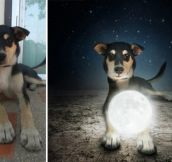 Artist Creates Surreal Pictures With Shelter Dogs.