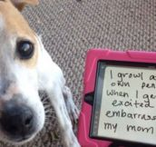 The 34 Naughtiest Dogs On The Planet Will Have You In Stitches When You Find Out What They Did.