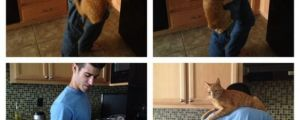 12 Hilarious Struggles Only A Cat Owner Would Truly Understand