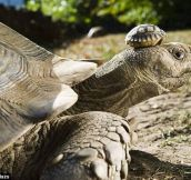 140 year old mom with her 5 day old son