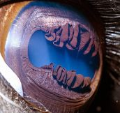 Amazing Close-Ups Of Animal Eyes By Suren Manvelyan