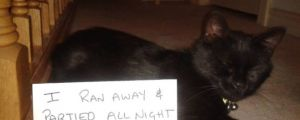 The Best of Cat Shaming – Part 12 (20 pics)