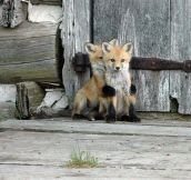 Fox Puppy Embrace