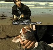 That dog deserves an oscar