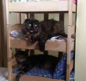 Tiny Beds