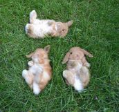 Three Baby Bunnies Watching The Sky Together