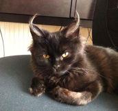 Evil Master Cat