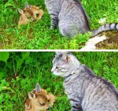 Cat Takes Care Of Fawn