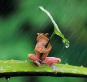 A Little Frog Under His Umbrella