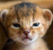 Newborn Baby Lion
