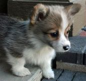 These Are Possibly the Cutest Animals On The Internet! (32 Pics)
